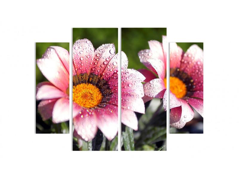 Цветы в росе