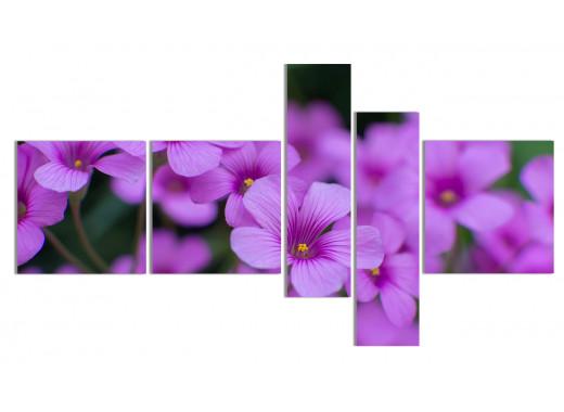 Фиолетовый сад 2