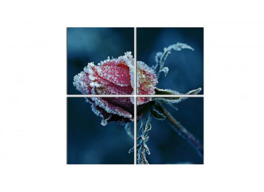 Морозная роза