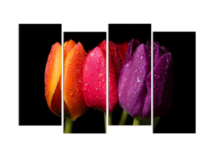 Три товарища-тюльпана