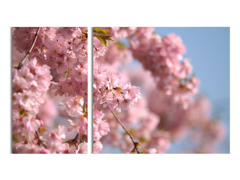 Солнышко и цветочки