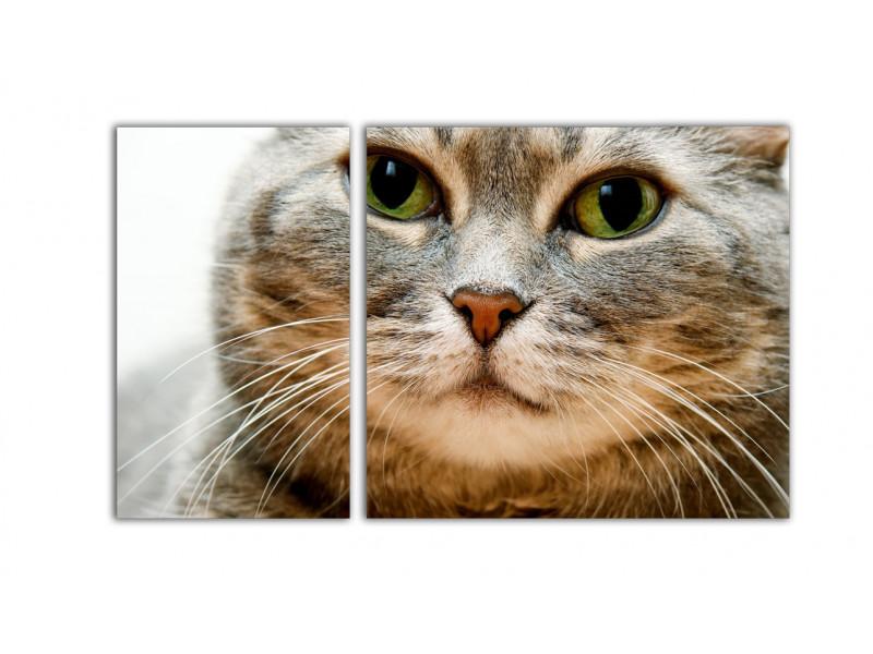 Розовый нос - белые усы