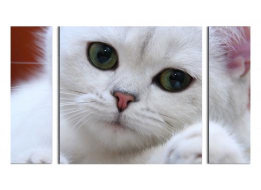 Белый котенок-телепат