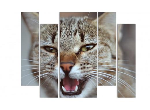 Вредная котейка
