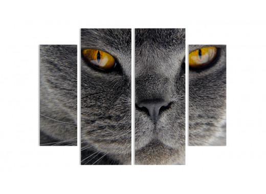 Кот по имени Зорро