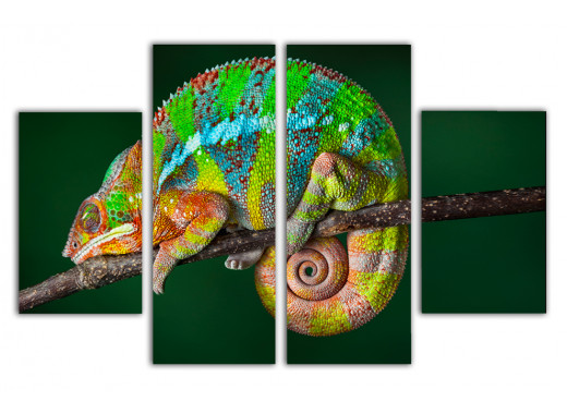 Хамелеон-эквилибрист