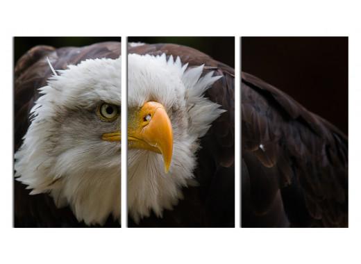 Орел выслеживает добычу