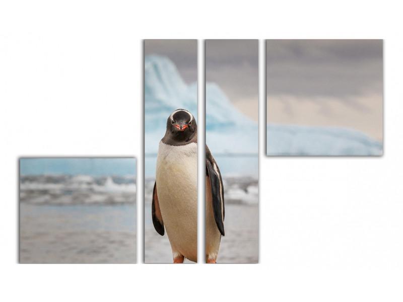 Пингви следит за тобой